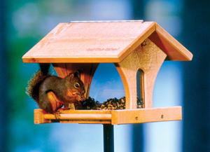 Red Squirrel on Double Vision